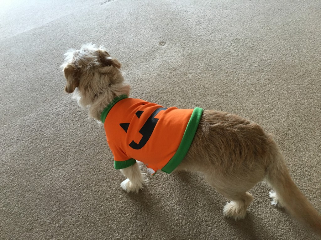 Halloween dog fancy dress
